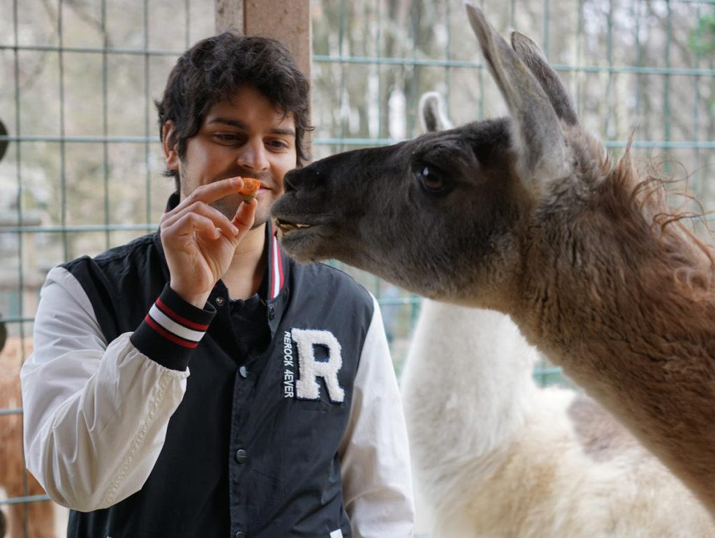 David füttert das Lama