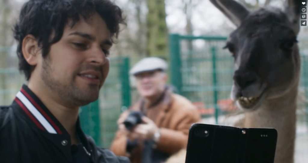 Ein süßen Lama will ein Selfie mit unserem Hauptdarsteller David machen